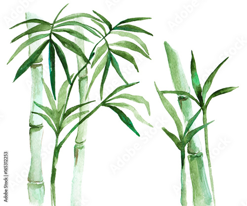 Watercolor bamboo illustration