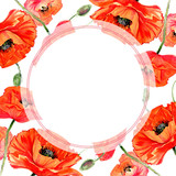 Wildflower poppies flower frame in a watercolor style. Full name of the plant: poppies. Aquarelle wild flower for background, texture, wrapper pattern, frame or border. - 165340049