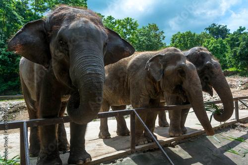 Морда слона крупным планом