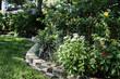 Pentas in a Peaceful Florida Garden