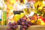Genuss in der Pfalz: Weinprobe im Herbst, Rotwein, Weißwein, Weinglas und Trauben im Weinberg :)