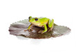 Isolated frog on leaf