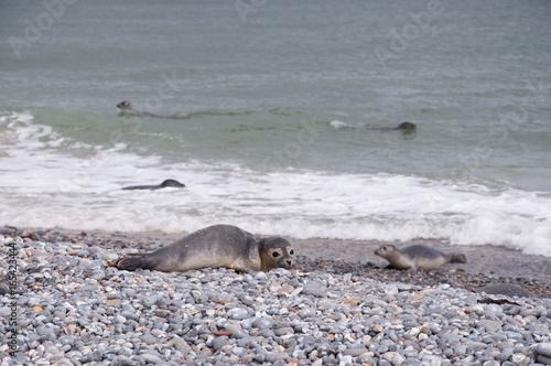 Foto op Canvas Noordzee Robbe