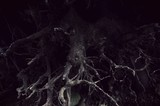 dark tree roots forest detail background - 165423847
