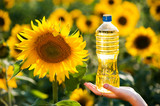 Bottle with sunflower oil in female hands against the background of blooming sunflowers