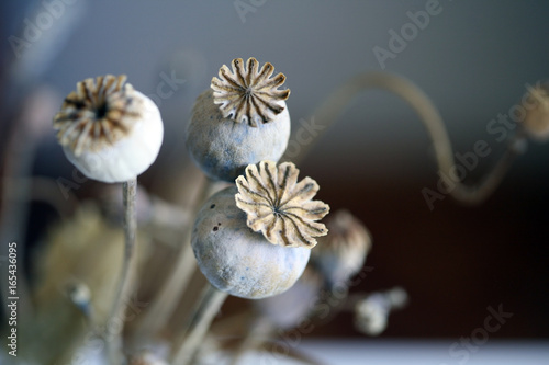 Close up of dried poppy plant; selective focus.