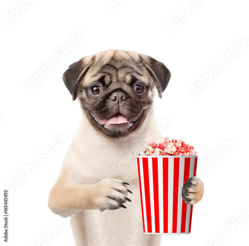 Funny puppy with popcorn basket. isolated on white background