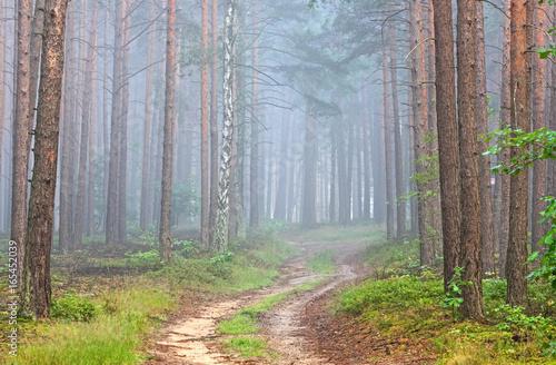Papiers peints Route dans la forêt Droga leśna.