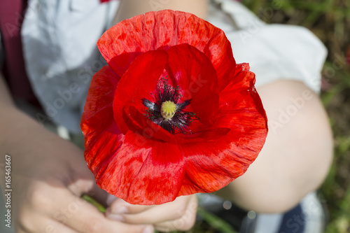 Poster Rood traf. Boy handed single poppy
