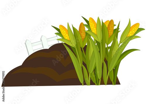 Aluminium Boerderij cartoon scene with cornfield and fence - isolated vector - illustration for children