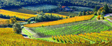 autumn scenery - beautiful vineyards of Tuscany, Italy - 165481667