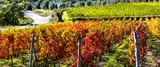 autumn landscape - beautiful vineyards of Tuscany, Italy - 165481831
