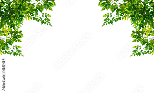 Green leaves frame isolated on white background. - 165501039