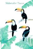 Watercolor Toucan - 165504439