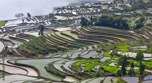 Tuinposter Rijstvelden Terraced rice fields in Yuanyang county, Yunnan, China
