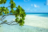 paysage de plage  tropicale, tahiti polynésie - 165539808
