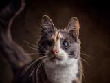 Verletzte Katze aus dem Tierschutz