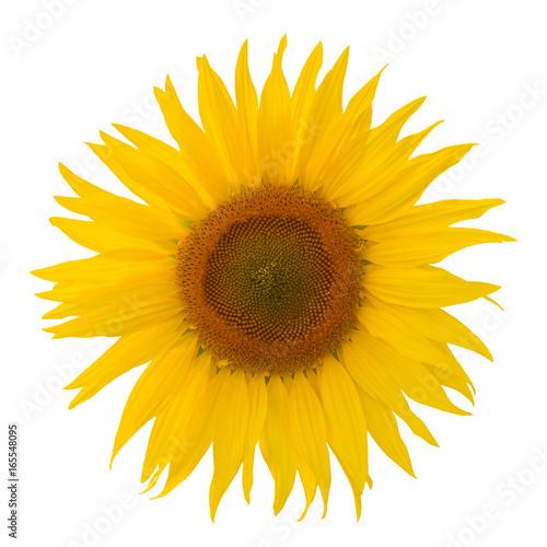 Leinwanddruck Bild Sonnenblume Blüte freigestellt auf weissem Hintergrund mit Blättern - sunflower, free