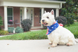 Dog in american flag scarf on driveway of luxury house - 165558632