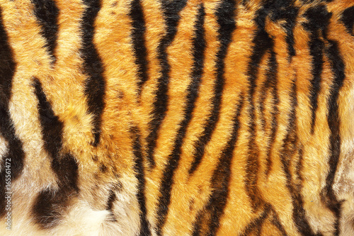 Tuinposter Panter pattern of siberian tiger