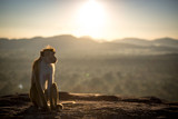 Monkeys of Sri Lanka