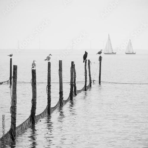 Northern Sea landscape - 165574002
