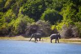 Elefanten im Yala Nationalpark, Sri Lanka