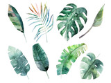 Watercolor leaves set. Hand drawn illustration. Isolated image - 165590417