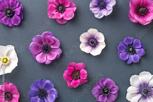 Anemone floral pattern. Colorful pink and purple flowers on a gray background. Top view. Flat lay - 165596415
