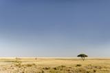 African landscape / African landscape in Etosha National Park, Namibia.