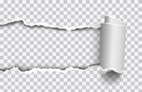 Vector realistic torn paper with rollled edge on transparent background - 165611652