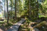 Wooden paths in the spring forest of Karelia