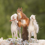 squirrel standing on horses