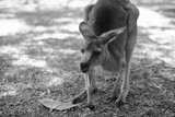 Kangaroo outside during the day.