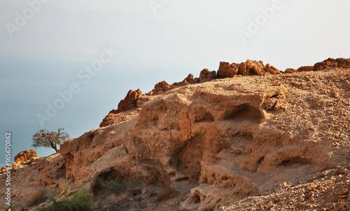 Ein Gedi national park. Israel