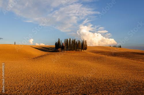 Tuinposter Toscane Toscana Cipressi GPS 43.062667° 11.558843°