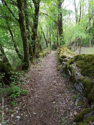 Foto op Canvas Weg in bos Saint Antonin