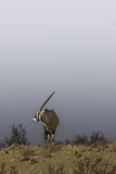 Sky line sets of this oryx
