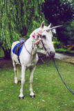 Horse dressed as a unicorn with the horn. Ideas for photoshoot. Wedding. Party. Outdoor