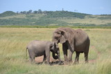 Elephant mother and calf in Kenya