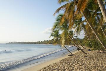 Plage de Sainte Anne en Martinique