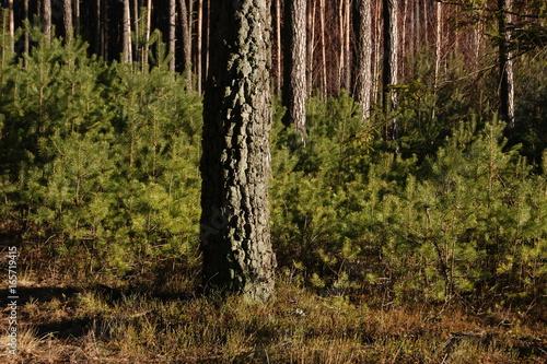 Foto op Canvas Weg in bos SONY DSC