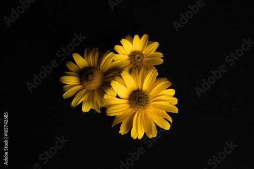 Trzy żółte kwiaty na czarnym tle.