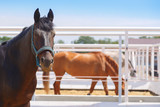 Horses are standing in their paddocks and eating hay - 165745484
