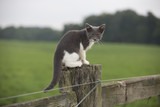 Feral kitten on a fencepost in rural Indiana