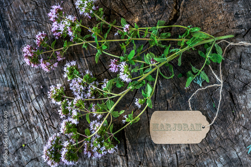 Fresh marjoram herb on wooden background