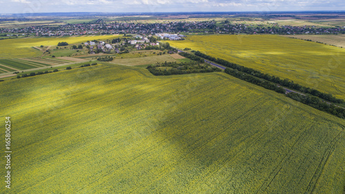 Poster Pistache aerial view agriculture field summer day. Summer day landscape.