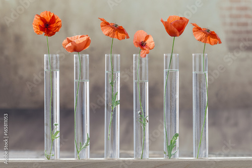 Poppy in test tube for herbal medicine and essential oil on . The concept of biological research.