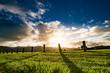 Sunrise on green farm field in New Zealand