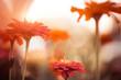 multicolor summertime garden flowers at sunset light